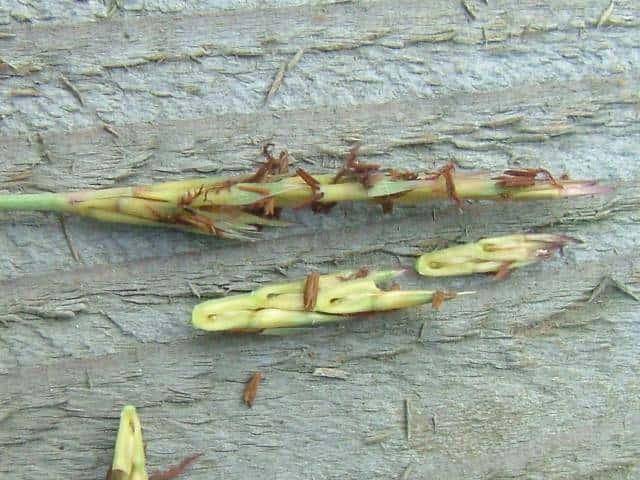カモノハシの画像 p1_24