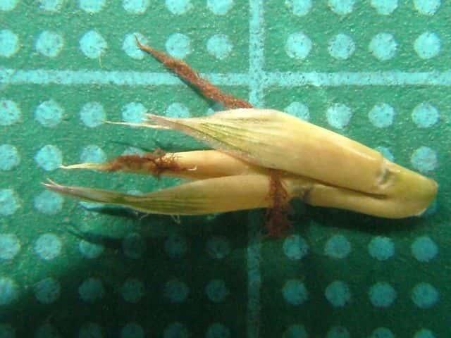 カモノハシの画像 p1_22