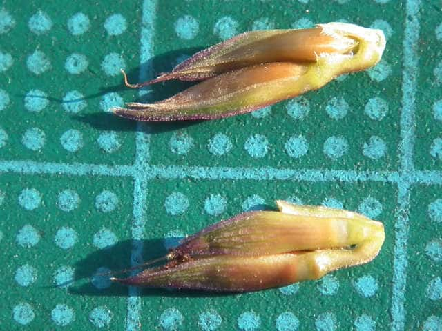 カモノハシの画像 p1_30